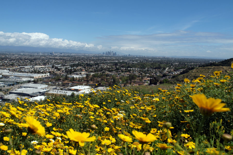LA view from Baldwin Hills